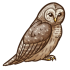 Barred Owl.png